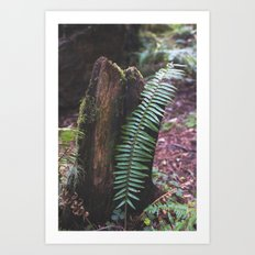 Plant and Bark Art Print
