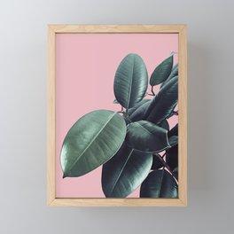 Ficus Elastica #14 #CoralBlush #decor #art #society6 Framed Mini Art Print