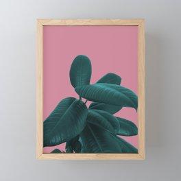 Ficus Elastica #11 #WildRose #decor #art #society6 Framed Mini Art Print