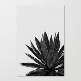 Agave Cactus Black & White Canvas Print