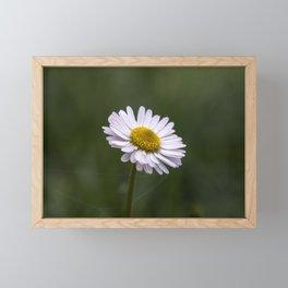 White daisy close up Framed Mini Art Print