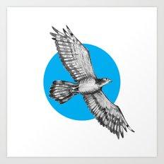 Flying Hawk Art Print
