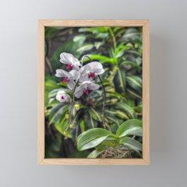 Tropical Orchids Framed Mini Art Print
