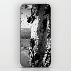 Rebirth in Yellowstone iPhone & iPod Skin