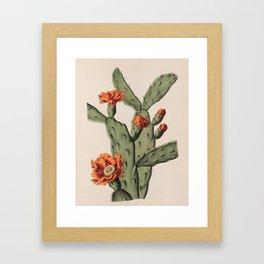 Botanical Cactus Framed Art Print