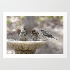 Bath Times Three Art Print