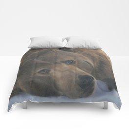 Ursus Major Comforters