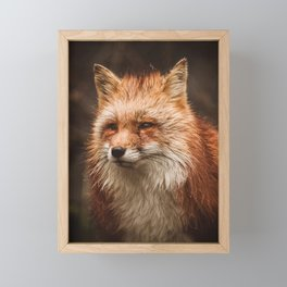 American Red Fox Framed Mini Art Print