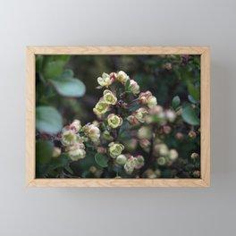 TINY FLOWERS OF A BERBERIS Framed Mini Art Print