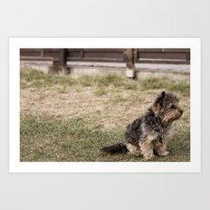 Patient Pup Art Print