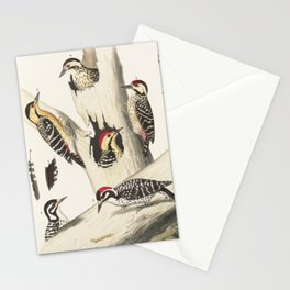 Naturalist Woodpeckers Stationery Cards