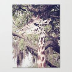 Regal Canvas Print