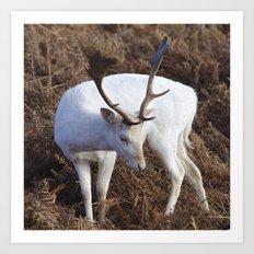 Albino deer Art Print