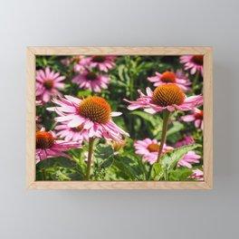 Purple coneflowers Framed Mini Art Print