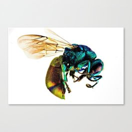 Multi-colored Cuckoo Wasp Portrait #2 Canvas Print