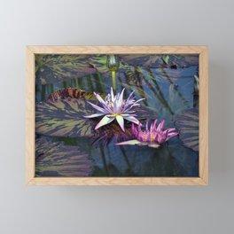 Water Lilies in Pond Framed Mini Art Print