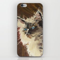 The Magnificent Ascent of the Mighty Bear (the Ragdoll Cat) iPhone & iPod Skin
