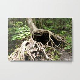 my love tree.. amazing natures treasures Metal Print