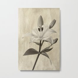 Lily in Sepia Metal Print