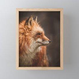 Red Fox (Vulpes vulpes) Framed Mini Art Print