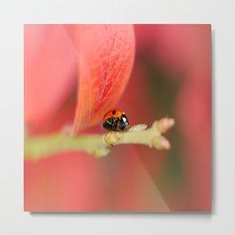 Ladybug On An Autumn Leaf Metal Print