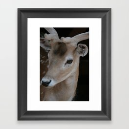 Young deer, portrait Framed Art Print