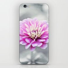 Pink Grey Flower Photography, Zinnia Floral Gray Nature Flowers iPhone & iPod Skin