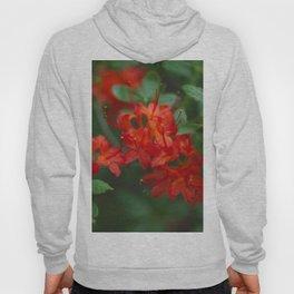 Floral Print 059 Hoody
