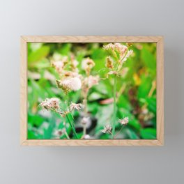 Nature photography dandelion II Framed Mini Art Print