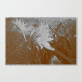 Old Flowers Canvas Print