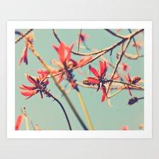 You're so far away. Coral tree nature photograph. Art Print
