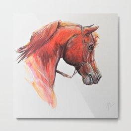 Red Arabian Horse Portrait Metal Print