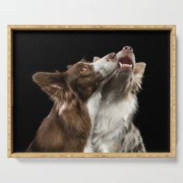 Two Border Collie dog Serving Tray