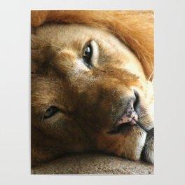 Lion Around Poster