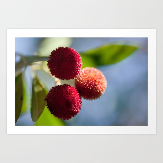Strawberry tree fruits 8697 Art Print