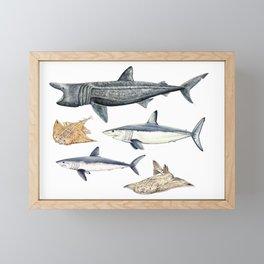 Shark diversity Framed Mini Art Print