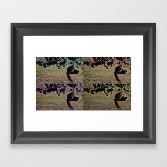 Greedy Squirrel II Framed Art Print