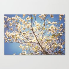 Dogwood Tree - Spring Flowering Tree Photography Canvas Print