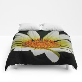 Daisy Bloom Comforters