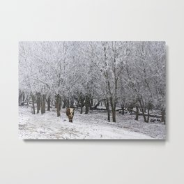 Winter Cow Metal Print
