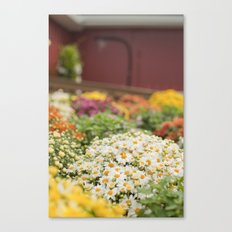 Potted Daisies Canvas Print