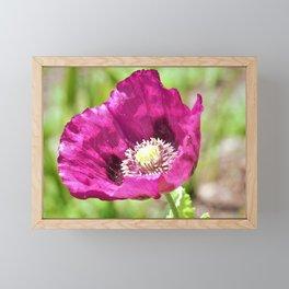 Purple Poppy by Reay of Light Photography Framed Mini Art Print