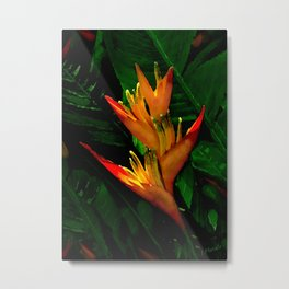 Hawaiian Heliconia at First Light Metal Print
