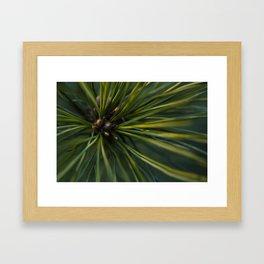 The Pine Framed Art Print
