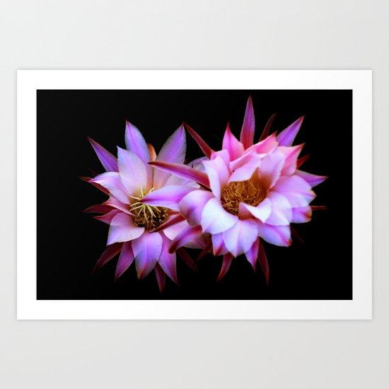 Purple cactus blossom Art Print
