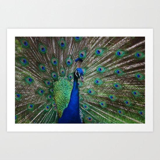 Peacock Parade Art Print