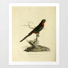 """Pennantian Parrot, female"" by Sarah Stone, 1790 Art Print"