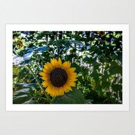 Sun Still Shines Art Print