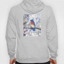 male eastern bluebird bokeh background Hoody