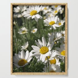 SUN WORSHIPPING WHITE DAISY FLOWERS Serving Tray